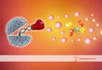 bağışıklık sisteminin yapısı